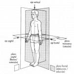 Ejes y planos anatómicos
