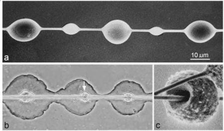 Fibras de seda de araña al microscopio