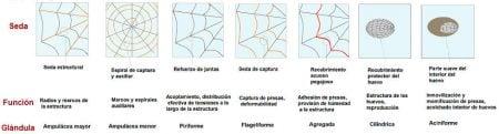 Tipos de seda de araña
