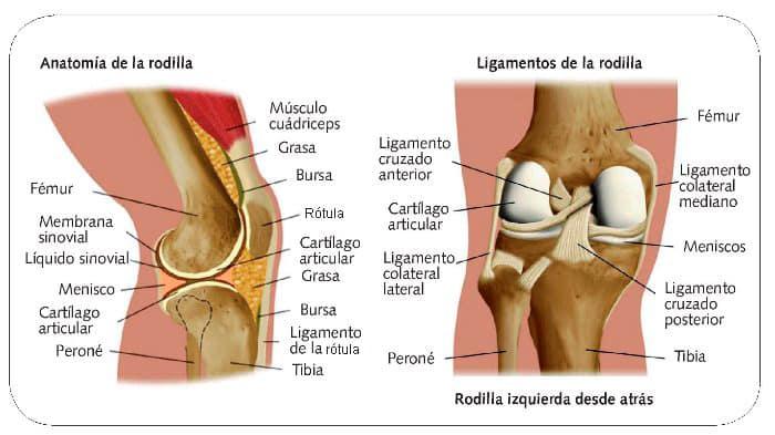 Qu son los ligamentos curiosoando - Dolor en la parte interior de la rodilla ...