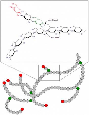 Estructura y esquema del glucógeno