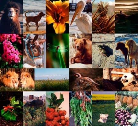 Flora y fauna (collage)