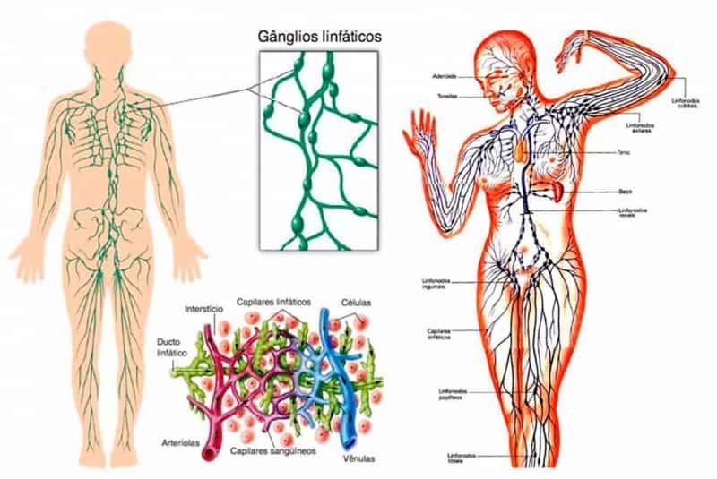 Ganglios y sistema linfático