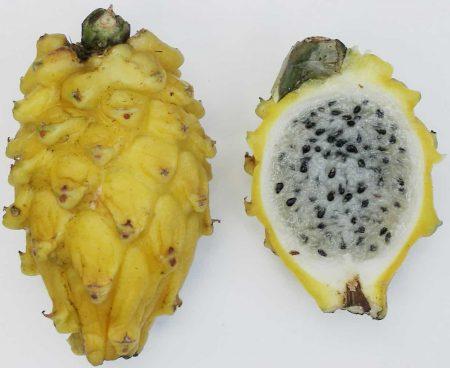 Fruta del dragón amarilla (pitahaya - Selenicereus megalanthus)