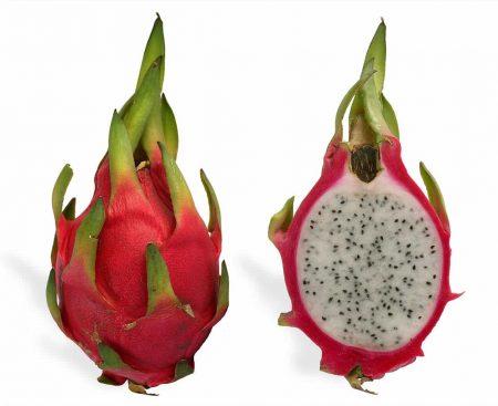 Pitahaya roja (Hylocereus undatus)