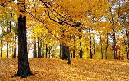 Árboles caducifolios en otoño