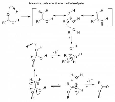Mecanismo de la esterificación de Fischer-Speier