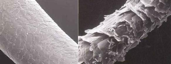 Comparación de una cutícula capilar sana y otra dañada