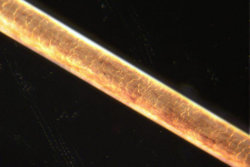 Fibra capilar ampliada