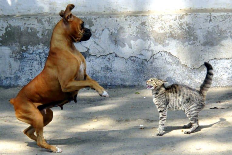 Perro y gato peleando