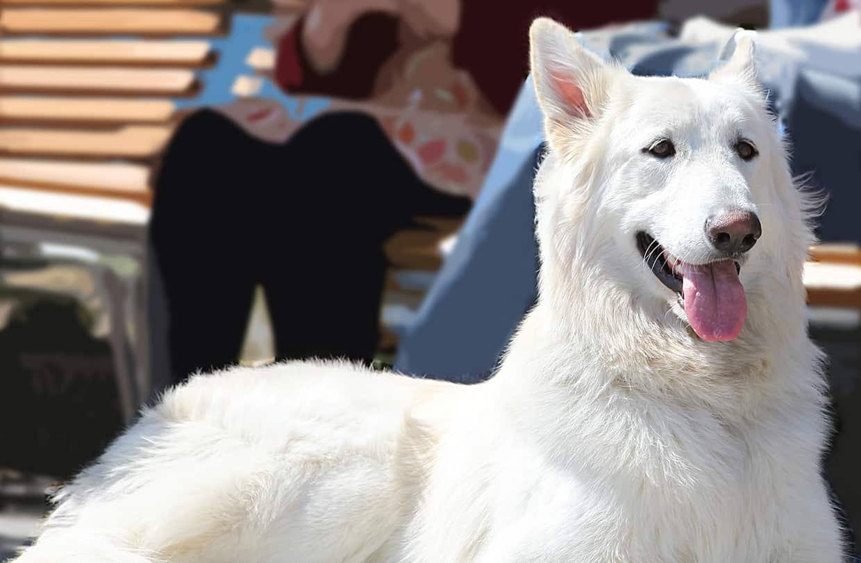 C mo lavar un perro de pelo blanco curiosoando - Como banar a un perro ...