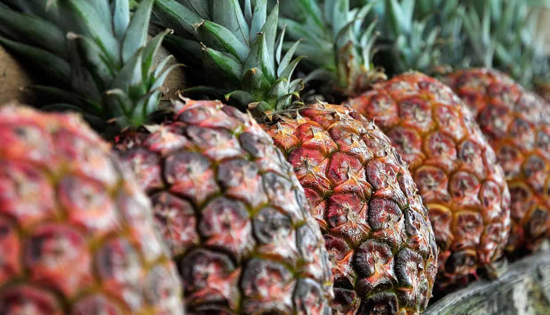 Sabías que la piña no es una fruta? – Curiosoando
