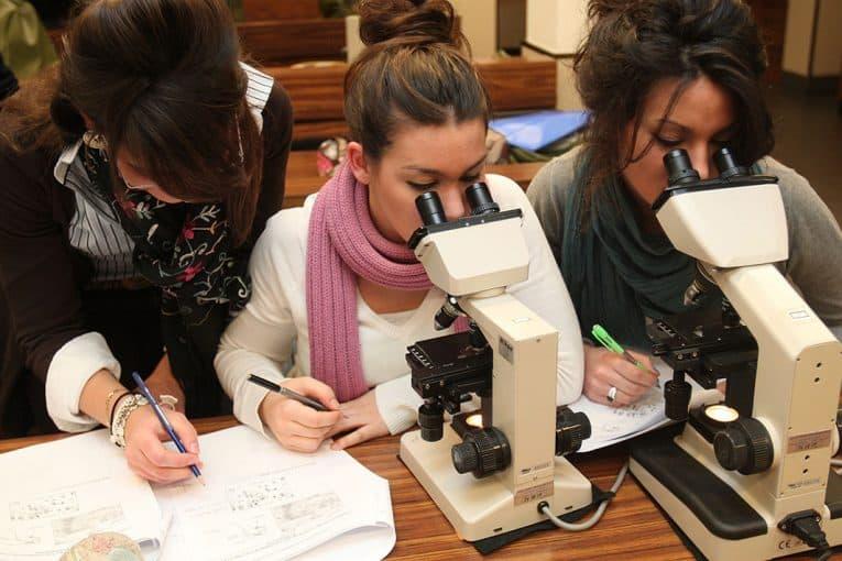 Utilizando el microscopio óptico