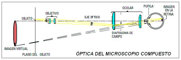 Funcionamiento mircoscopio óptico