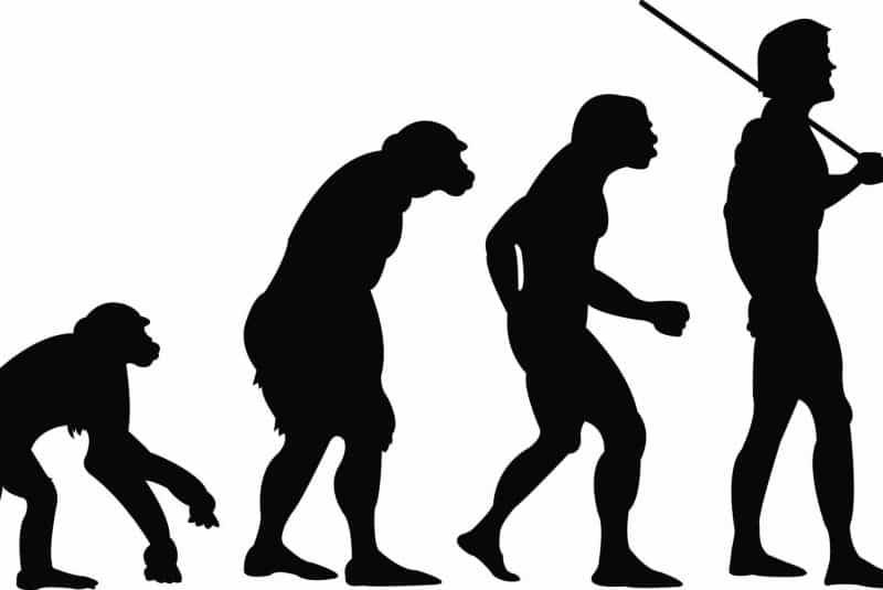 Ilustración evolución humana