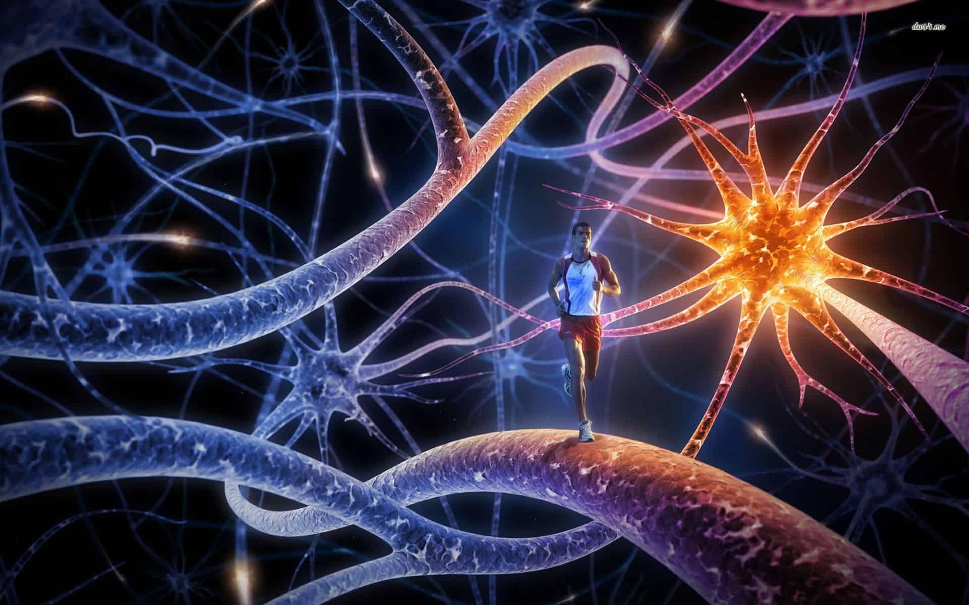 Qu es una neurona motora  Curiosoando