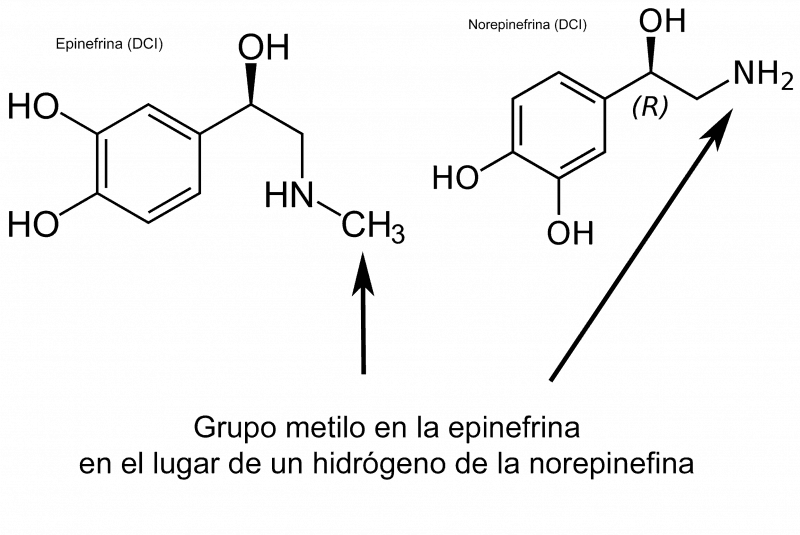 Epinefrina y norepinefrina