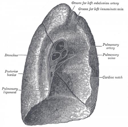 Superficie mediastínica del pulmón izquierdo