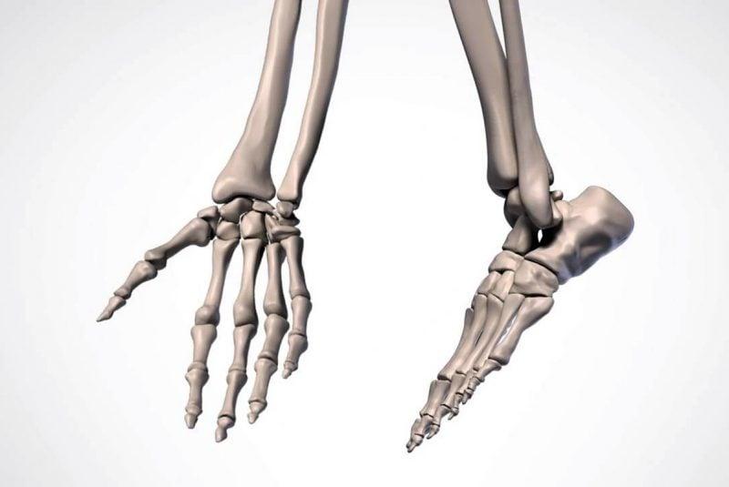 Artrodias en los carpos y tarsos