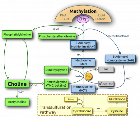 Metabolismo de la colina