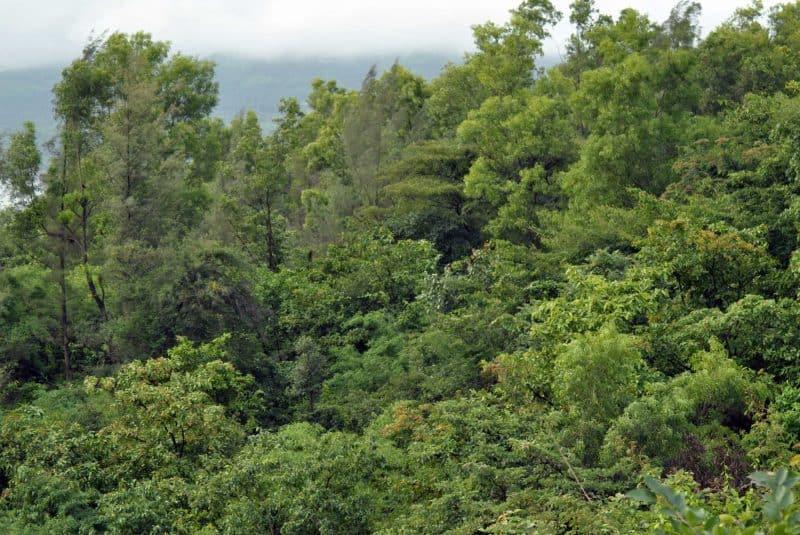 Resultado de una aforestación