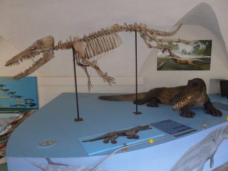 Ambulocetus natans (fósil)