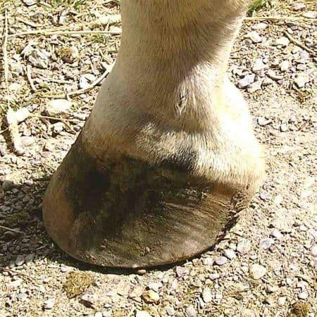 Pezuña de caballo
