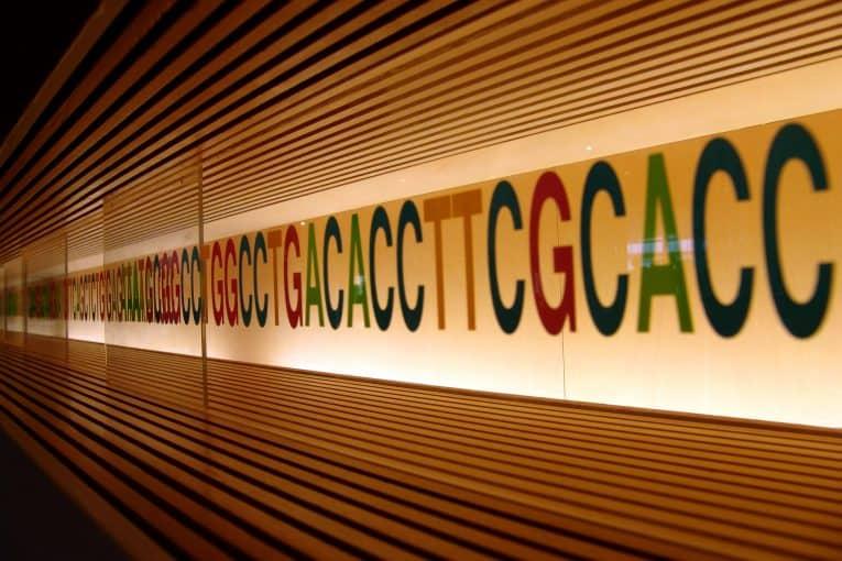 Miraikan: siglas de los nucleótidos del ADN
