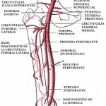Arteria femoral y sus ramas