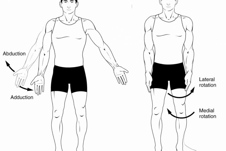 Abducción y aducción vs rotación lateral y medial