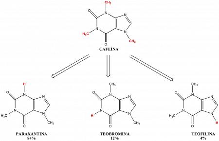 Metabolitos de la cafeína