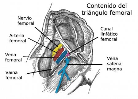 Contenido del triángulo femoral