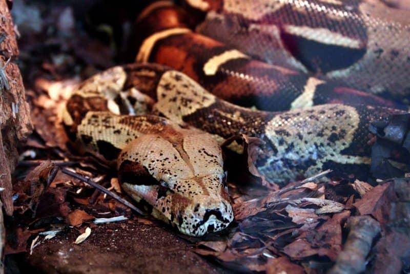 Serpiente en un terrario