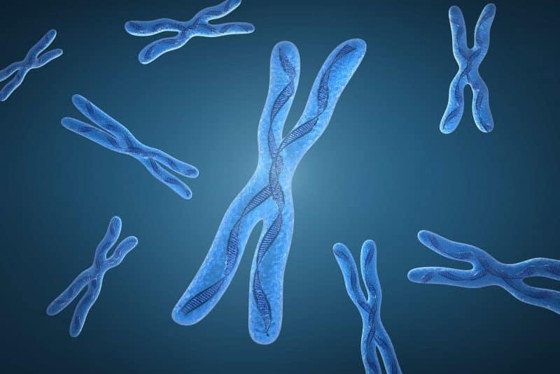 Cromosoma X (representación artística)