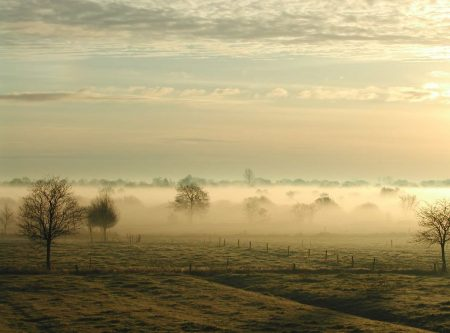 Niebla de radiación en una llanura