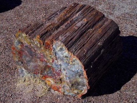Fósil de madera petrificada