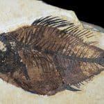 pez fósil