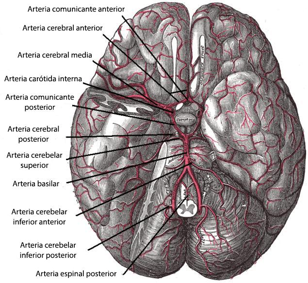Resultado de imagen de polígono de willis