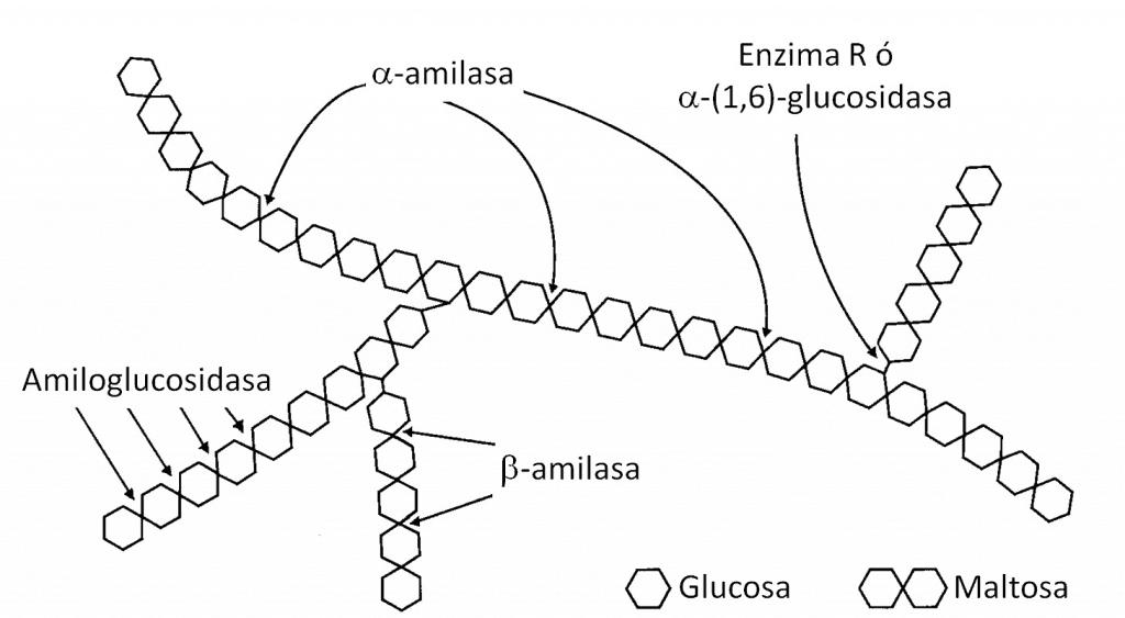 Amilasas