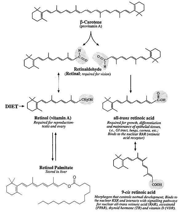 Vitamina A y retinoides