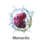 Monocito - Ilustración 3D