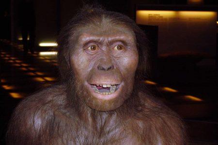 Recreación Australopithecus afarensis