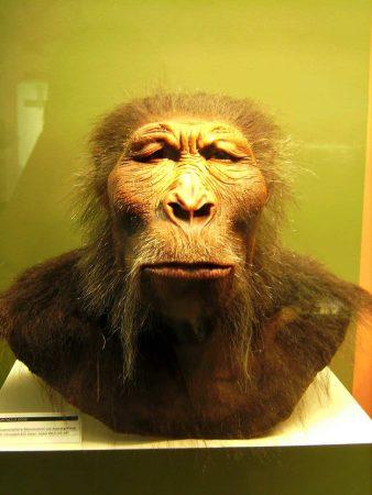 Reconstrucción Paranthropus boisei