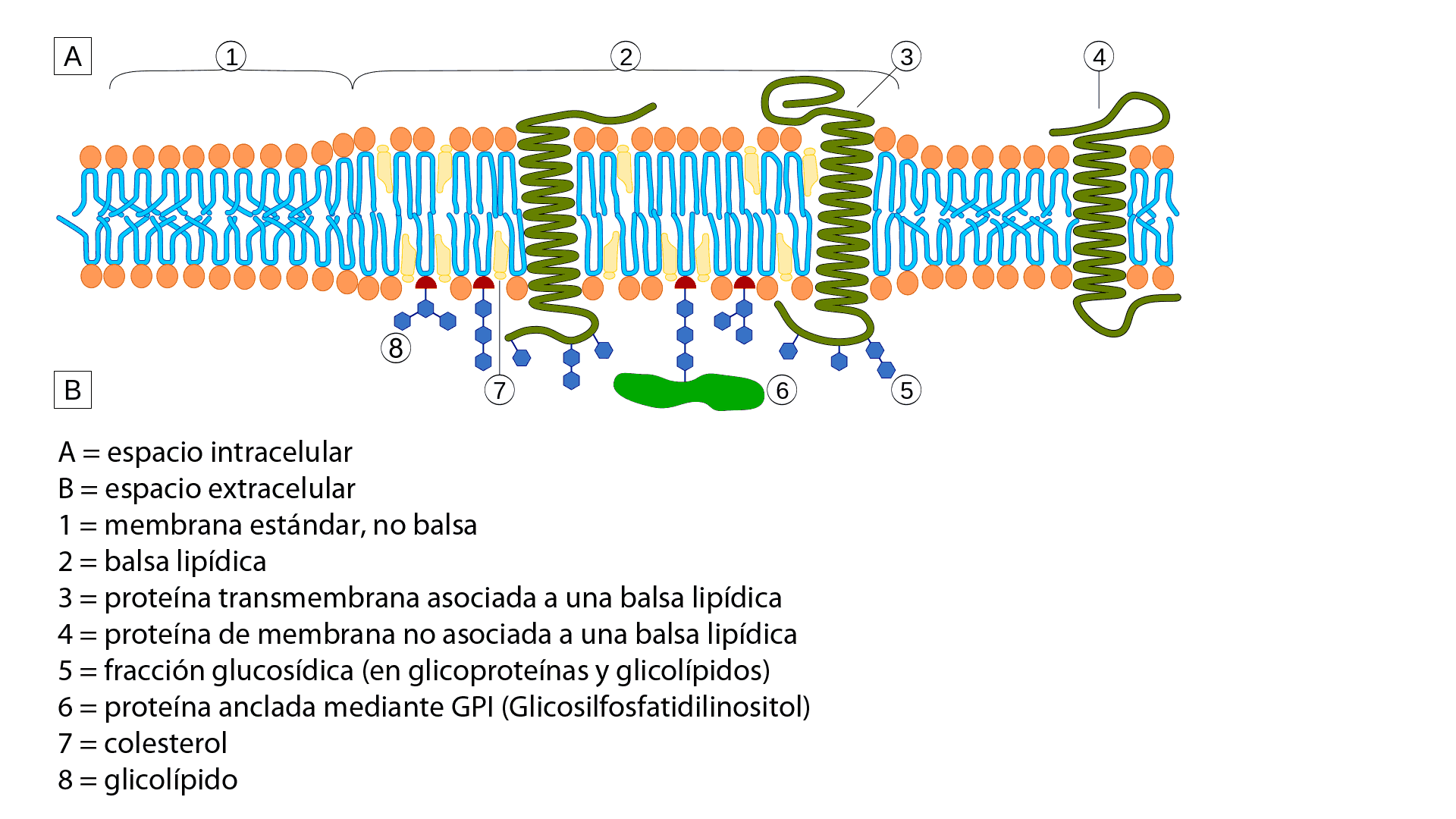 Molecular cell biology lodish 6th edition