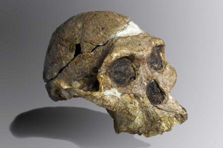 Señora Ples (Australopithecus africanus)