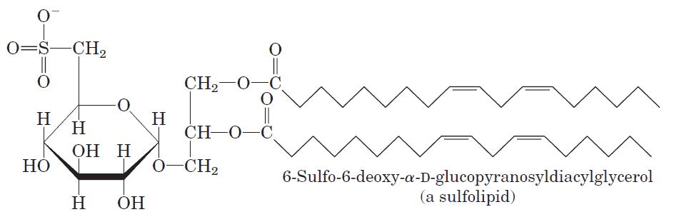Un sulfolípido