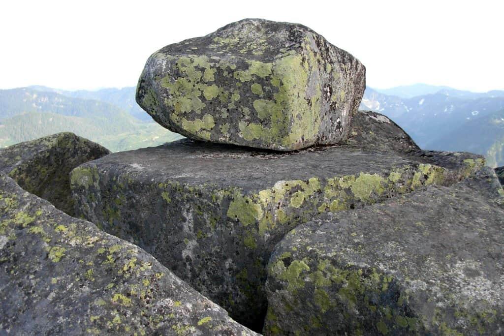 Liquenes sobre rocas de granito
