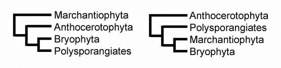 Cladograma briofitas