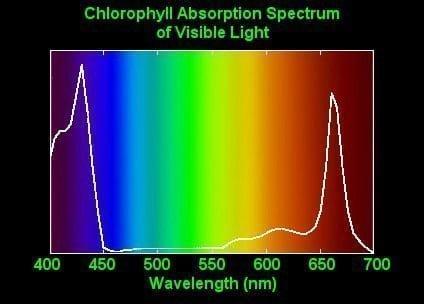 Espectro de absorción de la clorofila