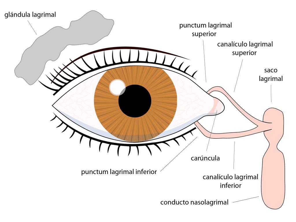 Sistema lacrimal